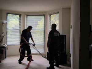 carpet stain removal redbank